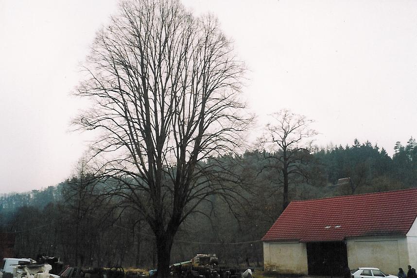 Lípa Kaceřovský mlýn 1.jpg